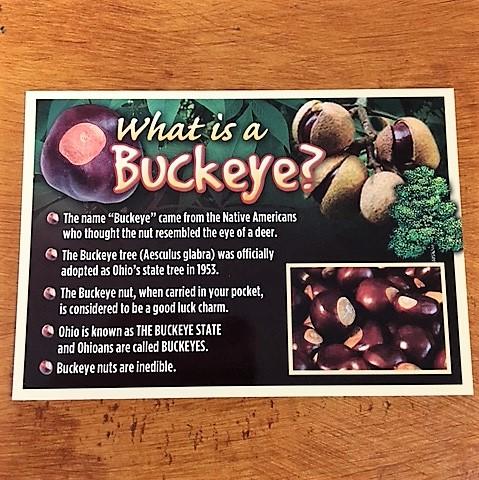 what is a buckeye postcard flavor of ohio
